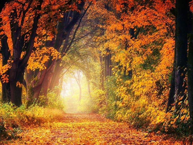 Autumnal employee engagement in Oxfordshire and beyond